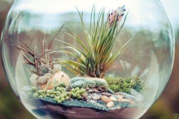 Fishbowl plant